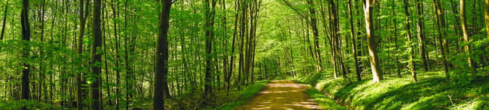 Road in a green forest Stock Photos