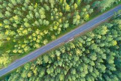 Road in green forest royalty free stock photo