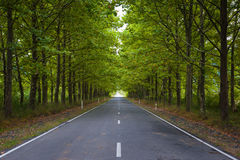Road in green forest Stock Photo