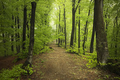 Road in green forest Royalty Free Stock Photos