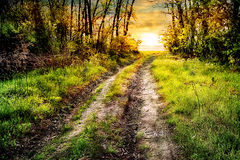 Road in the green forest stretches to the sun Stock Photos