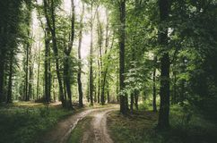 Road through green forest in summer Royalty Free Stock Image