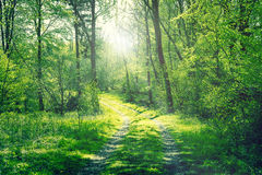 Road in a green forest with sunshine Stock Images