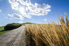 Road on a green hill. The road leading to the top Royalty Free Stock Photo