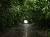 Road in green leaves tonnel Royalty Free Stock Photography