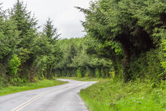 Road between Green lush plants of temperate rainforest at Olympic National Park Washington USA Stock Image