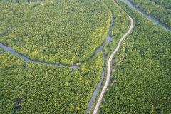 Road in the green mangrove forest at Phang-Nga bay southern of T. Top view road in the green mangrove forest at Phang-Nga bay southern of Thailand. Aerial view Stock Image