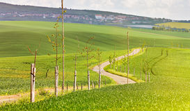 Road in a green spring farmland. Sunny rural spring landscape Stock Image