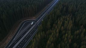 Road through the green spruce forest, aerial view. stock video