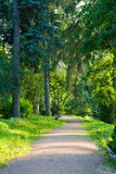 Road in a green summer forest Royalty Free Stock Photography