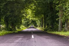 The road between the trees. A tunnel of trees and a never-ending road. royalty free stock photography