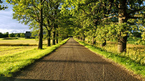 Green road and trees Royalty Free Stock Photos