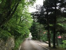 The Road among green trees royalty free stock image
