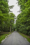 Road with green trees, summer time. Royalty Free Stock Image