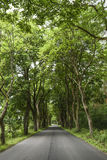Road with green trees, summer time. Stock Photos