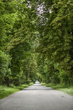 Road with green trees, summer time. Stock Image