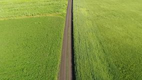 Road among a green wheat fields in Russia. Road among green wheat fields in Russia stock video