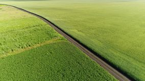 Road among a green wheat fields in Russia. Road among green wheat fields in Russia stock footage