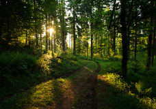 Road in green wild forest at sunset background Stock Photos