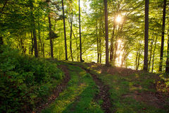 Road in green wild forest at sunset background Royalty Free Stock Photos