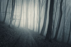 Road in haunted forest with blue fog on Halloween Stock Image
