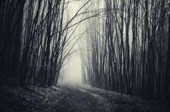Road in Haunted Halloween forest with fog Stock Images