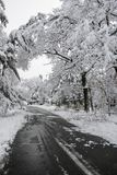 Road with Heavy Winter Snow. On Trees royalty free stock images