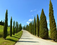 Road on hill with cypress trees in Tuscany Royalty Free Stock Image