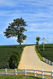 Road on hill in the tea plantation Stock Photography