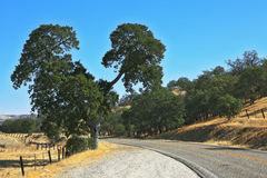 The road in the hills Stock Photography