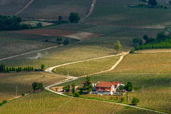 Road among hills and vineyards in spring. Stock Image