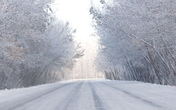 Road and hoar-frost in winter Royalty Free Stock Photos