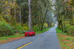 Road at Hoh Rainforest. Red car on scenic road at Hoh Rainforest, Olympic National Park, Washington Stock Photos