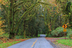 Road at Hoh Rainforest. Scenic road at Hoh Rainforest, Olympic National Park, Washington Stock Image