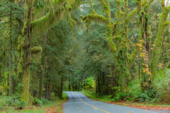 Road at Hoh Rainforest Royalty Free Stock Images