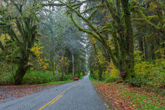 Road at Hoh Rainforest Royalty Free Stock Photo