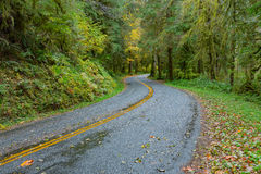 Road at Hoh Rainforest Stock Photography