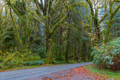 Road at Hoh Rainforest. Scenic road at Hoh Rainforest, Olympic National Park, Washington Royalty Free Stock Photos