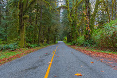 Road at Hoh Rainforest Stock Photo
