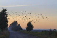 The road home to a flock of starlings Royalty Free Stock Photography