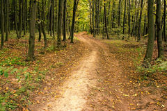 Road in hornbeam forest Stock Image