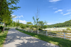 Road in a horse ranch Stock Image