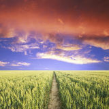 Road hrough the green field Royalty Free Stock Photo