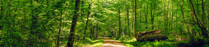Road in a idyllic forest Royalty Free Stock Photos