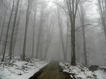 Free Road In A Misty Forest Winter Royalty Free Stock Photos - 160710298