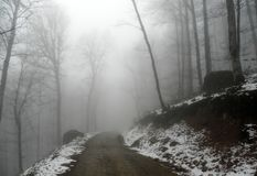 Free Road In A Misty Forest Winter Royalty Free Stock Photos - 160710518
