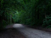 Road In A Mystical Forest Royalty Free Stock Photography