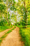 Road In Birch Forest Stock Images