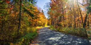 Road In Fall Forest Royalty Free Stock Photos