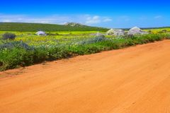 Road In Flower Field Royalty Free Stock Images